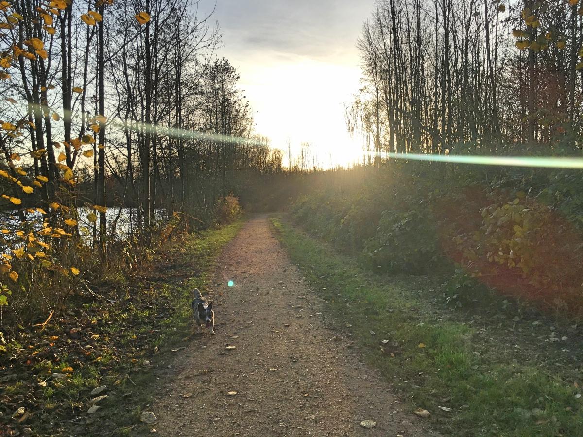 Hoe wandelen in het bos mij helpt | Mijn gedachten & ik