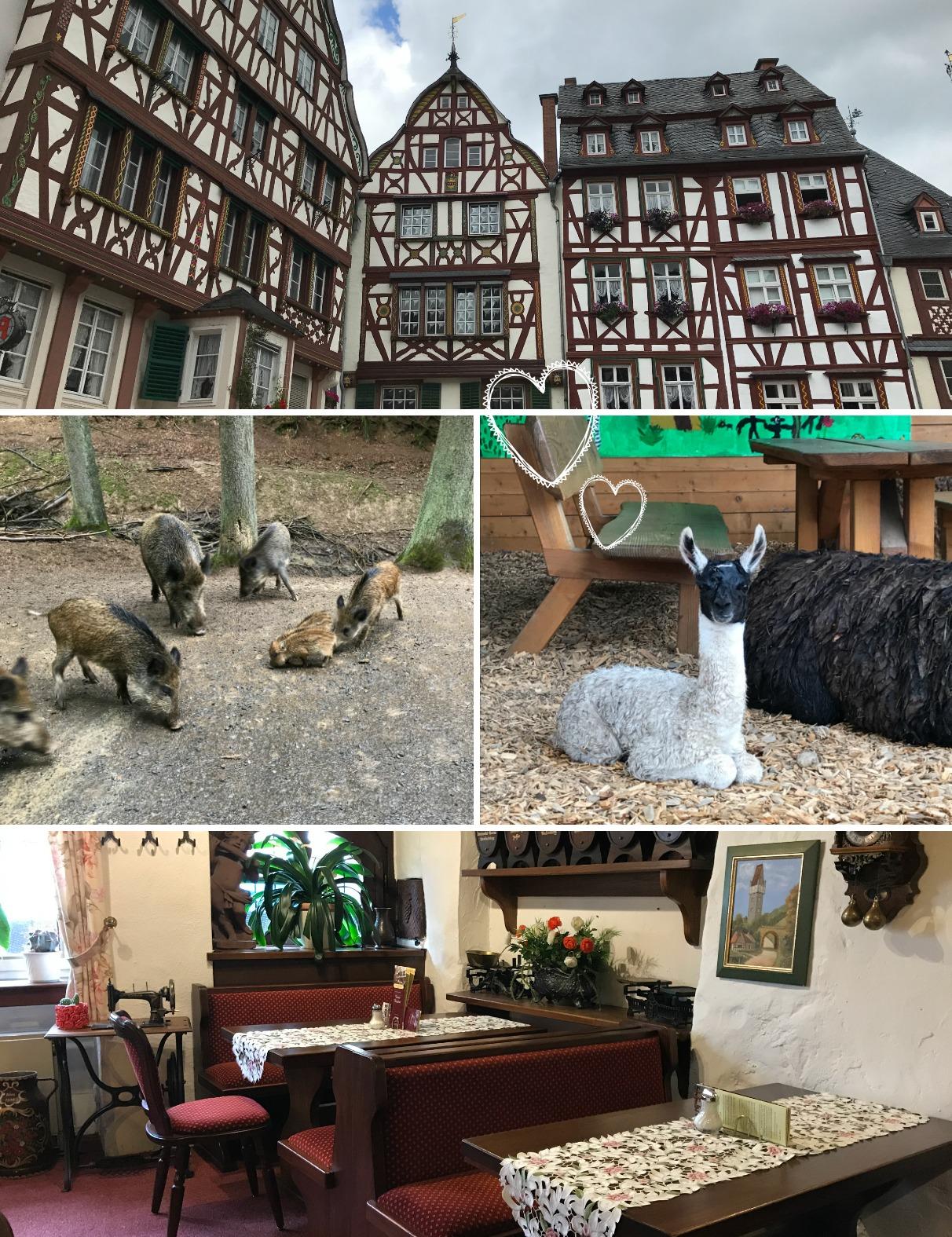 Wildpark eiffel Duitsland