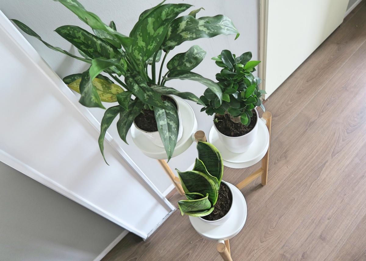 makkelijke planten voor in huis