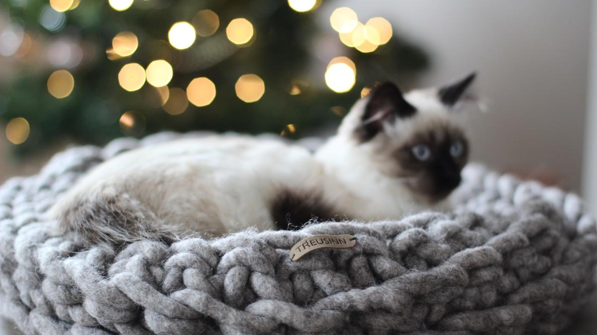 treusinn schaapswol kattenmand